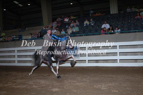 CLASS 41 - 2 YR OLD AM   MARES & GELDINGS