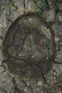 Hoofprints & more