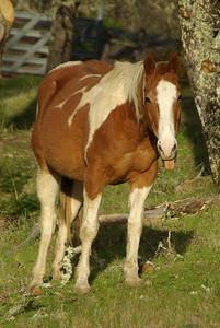 Nona's horses 2012