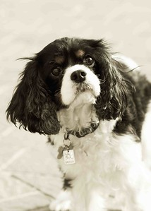 Clifton_Dogs_0056