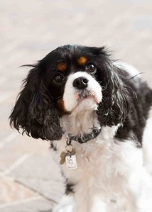 Clifton_Dogs_0055