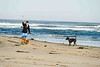 Gourlay_Dogs_0002