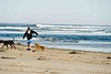 Gourlay_Dogs_0007