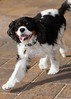 Clifton_Dogs_0061