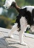 Clifton_Dogs_0037