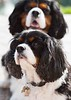 Clifton_Dogs_0044