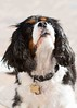 Clifton_Dogs_0054