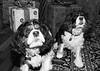 Clifton_Dogs_0031