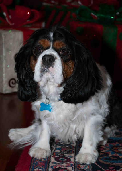 Clifton_Dogs_0009
