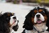 Clifton_Dogs_0057