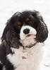 Clifton_Dogs_0052