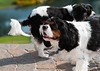 Clifton_Dogs_0038