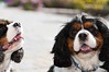 Clifton_Dogs_0058