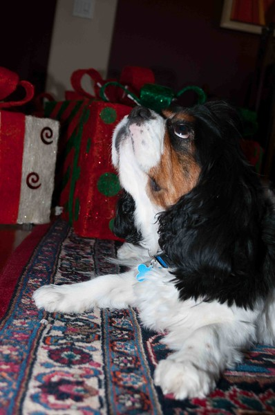 Clifton_Dogs_0005