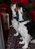 Clifton_Dogs_0014