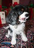 Clifton_Dogs_0020