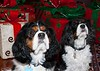Clifton_Dogs_0029