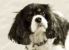Clifton_Dogs_0056a