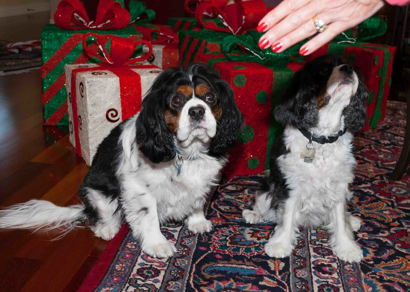 Clifton_Dogs_0026