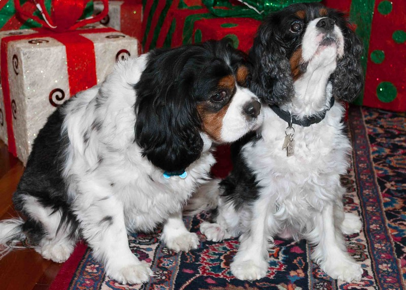 Clifton_Dogs_0027