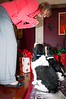 Clifton_Dogs_0012