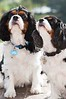 Clifton_Dogs_0043