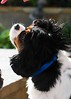 Clifton_Dogs_0059