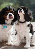 Clifton_Dogs_0041