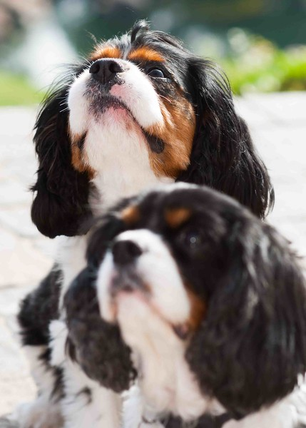 Clifton_Dogs_0045