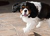 Clifton_Dogs_0064