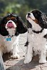 Clifton_Dogs_0042
