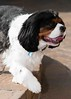 Clifton_Dogs_0065