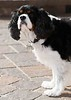 Clifton_Dogs_0035