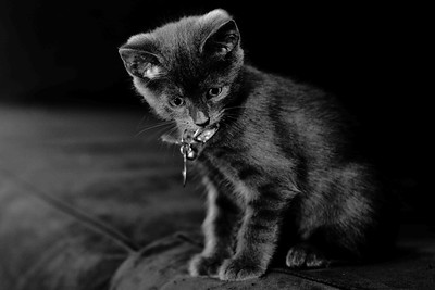 DSC_5193 BW Shadow_Kitten_9x14_300dpi_
