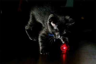 DSC_5147 Shadow_Red_Ball_Color_300dpi_1