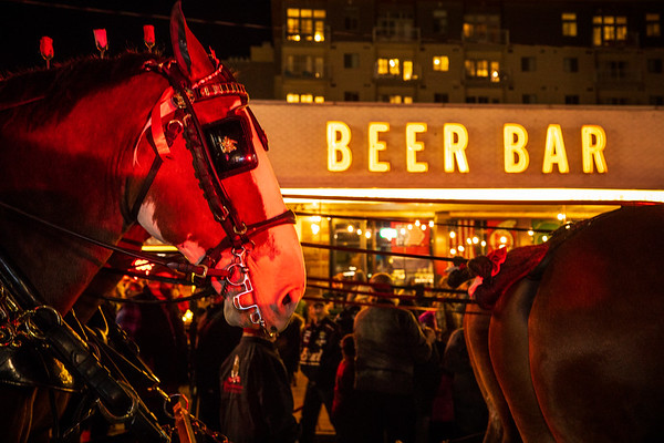 Budweiser's Clydesdales celebrate the end of Utah's 3.2% beer with a funeral procession in downtown Salt Lake City, Utah.