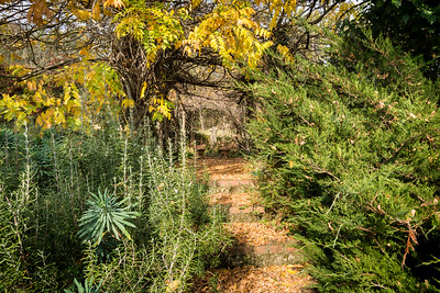 Umbrian Garden-12