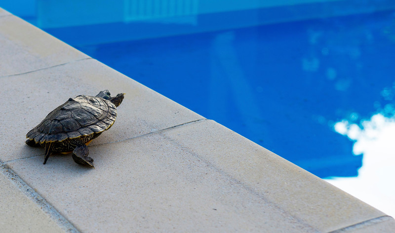 maylis_turtle_plexi_cropped