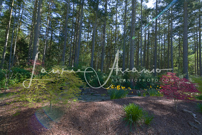 McCall_AirBNB_viewgarden1