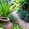 Tropical Garden Path & Plantings