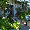 California friendly Mediterranean style succulent garden