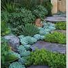 Succulent mix w/ stone steps