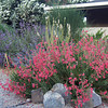 Mixed dry garden with gravel & boulders
