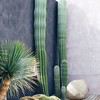 Modern Cacti Garden