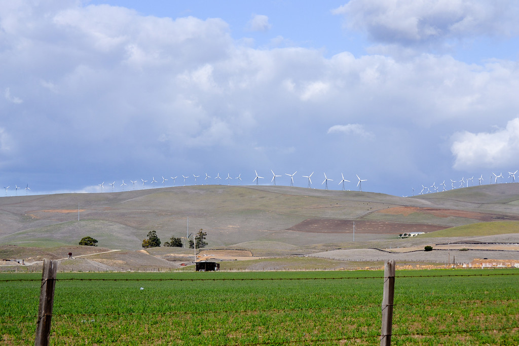 Altamont Pass Wind Farm on the Horizon - February - Patterson Pass Road