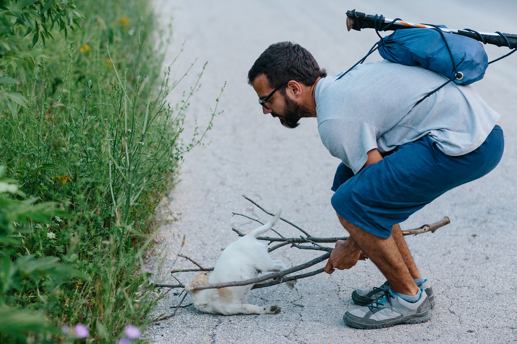 Juan (Spain) removing a dead puppy from the road. Most probably it was killed by a car.