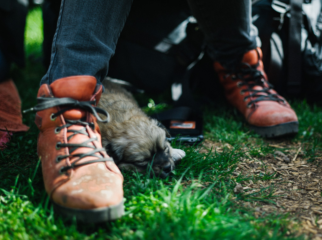 Sleeping puppy and famous Anna's shoes.