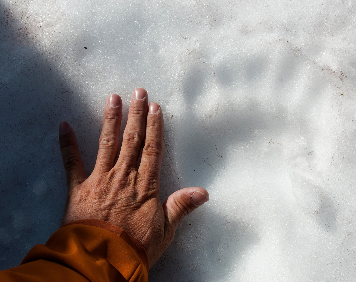 Grizzly Print in the Snow