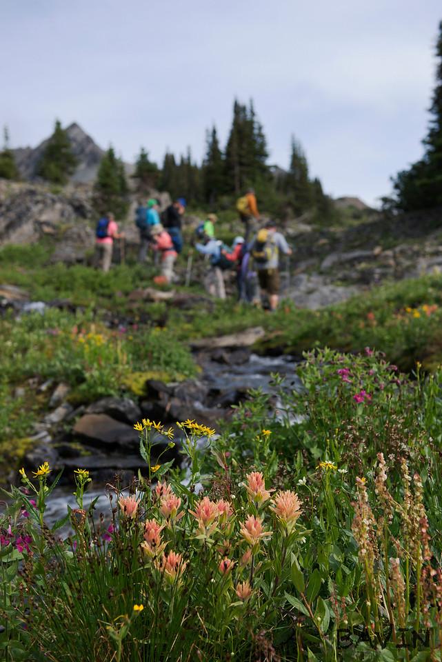 Wildflower Wanderings