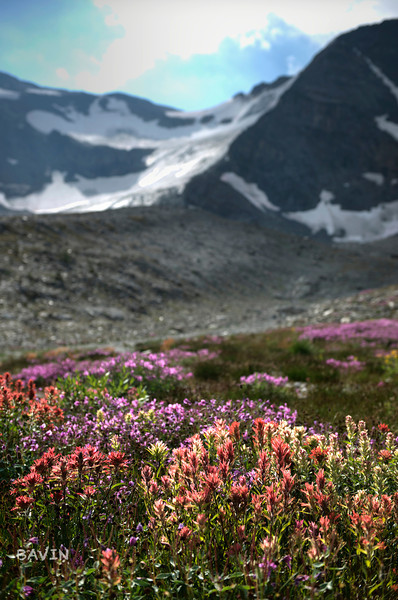 Wildflowers in the headwaters of Frances Creek